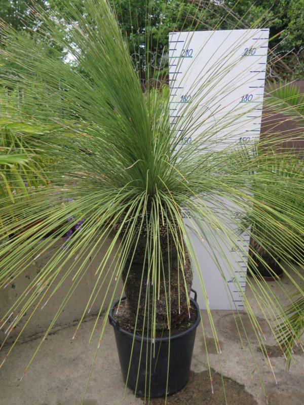Půjčovna rostlin Barrandov